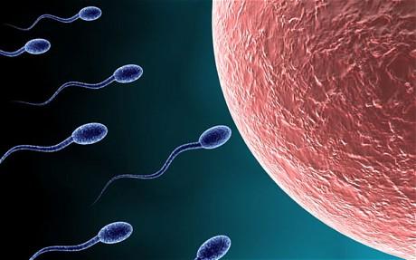 Sperma menuju ke arah ovum