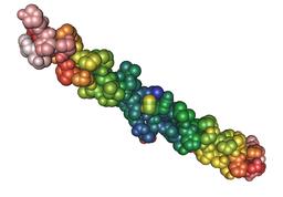 Collagen's triple helix structure